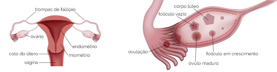 Cancer colon y ovario